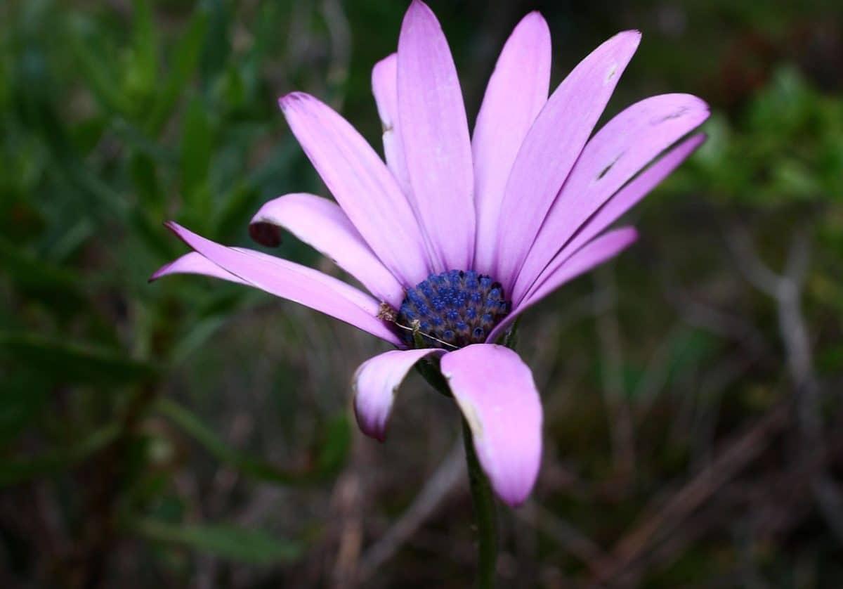 flora, nature, flower, summer, daisy, petal, plant, macro, garden