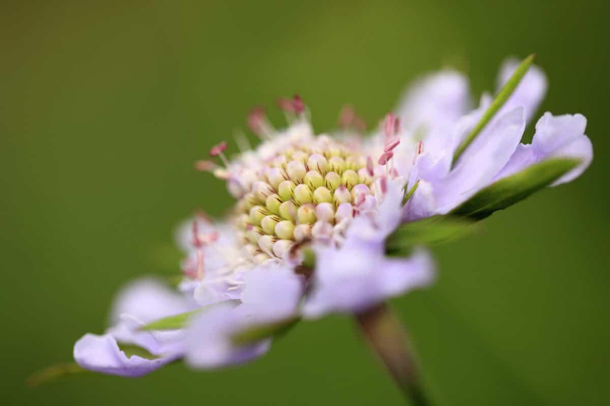 leaf, summer, nature, flower, flora, plant, herb, macro, pistil, blossom