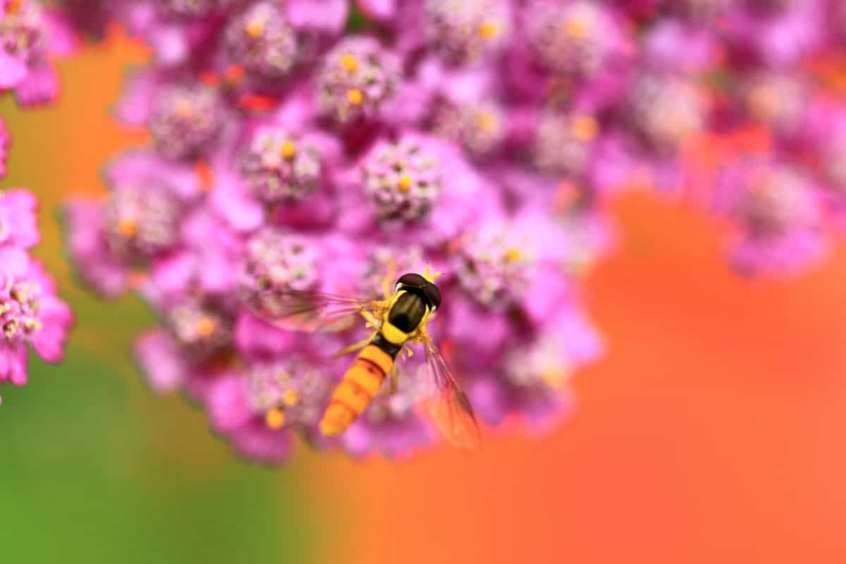 nature, insect, flower, wasp, macro, summer, plant, arthropod, garden