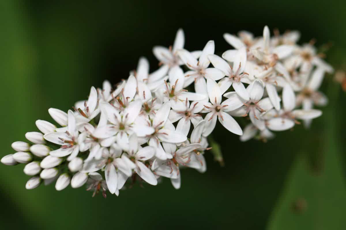 nature, flora, flower, herb, plant, blossom, petal, garden