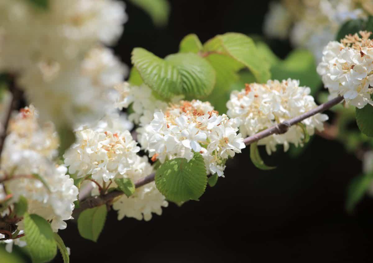 leaf, flower, garden, nature, petal, tree, flora, plant, blossom