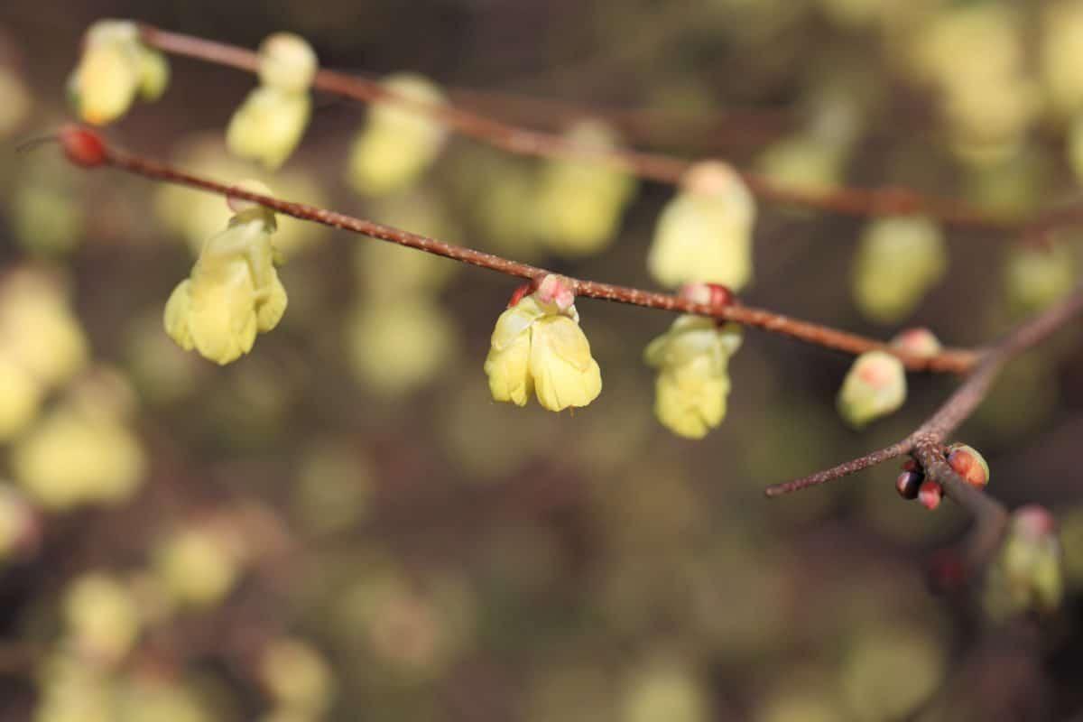 flora, branch, spring, leaf, flower, tree, garden, nature