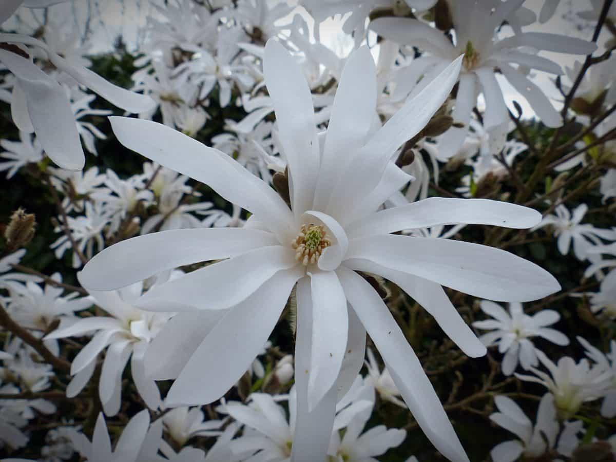 nature, garden, leaf, flora, flower, macro, detail, tree, plant