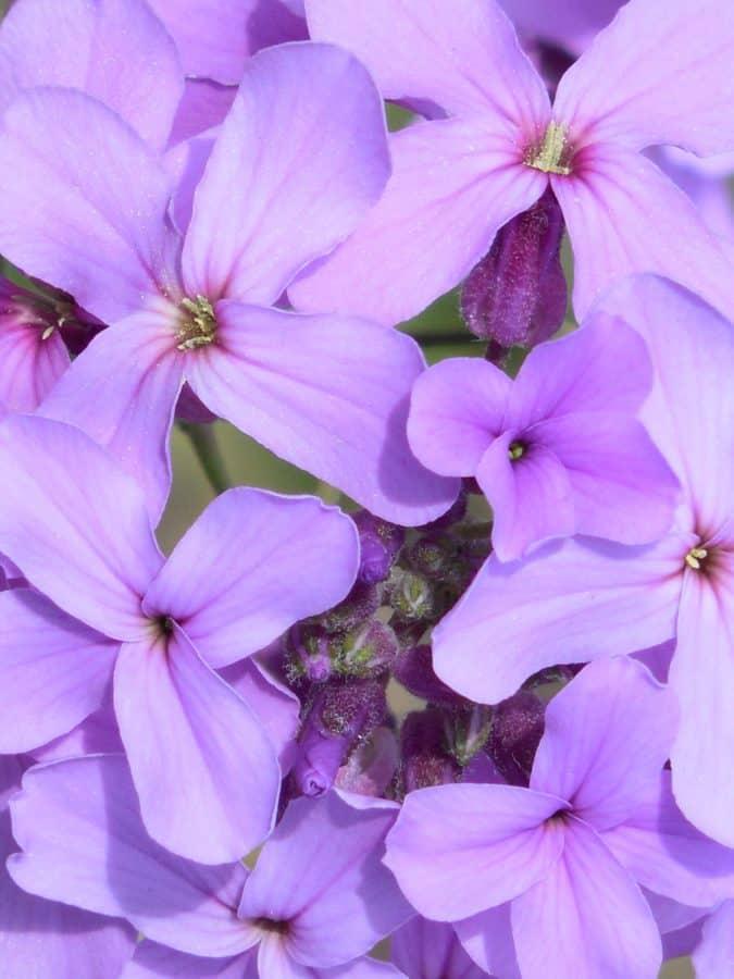 vakker, blad, flora, natur, blomst, hage, sommer, herb