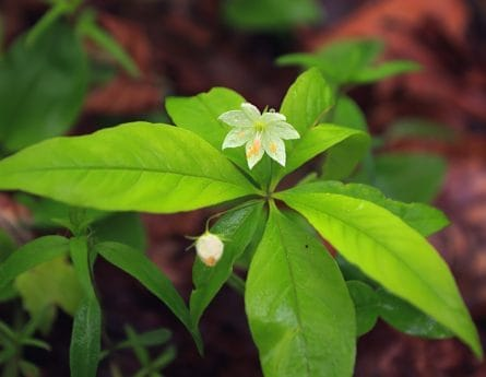 miljø, flora, natur, blad, tree, anlegg, blader, gren