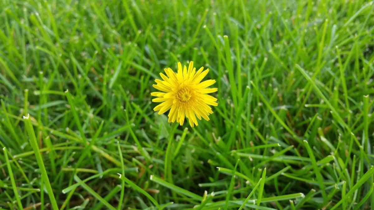 garden, nature, summer, environment, flora, grass, lawn, field
