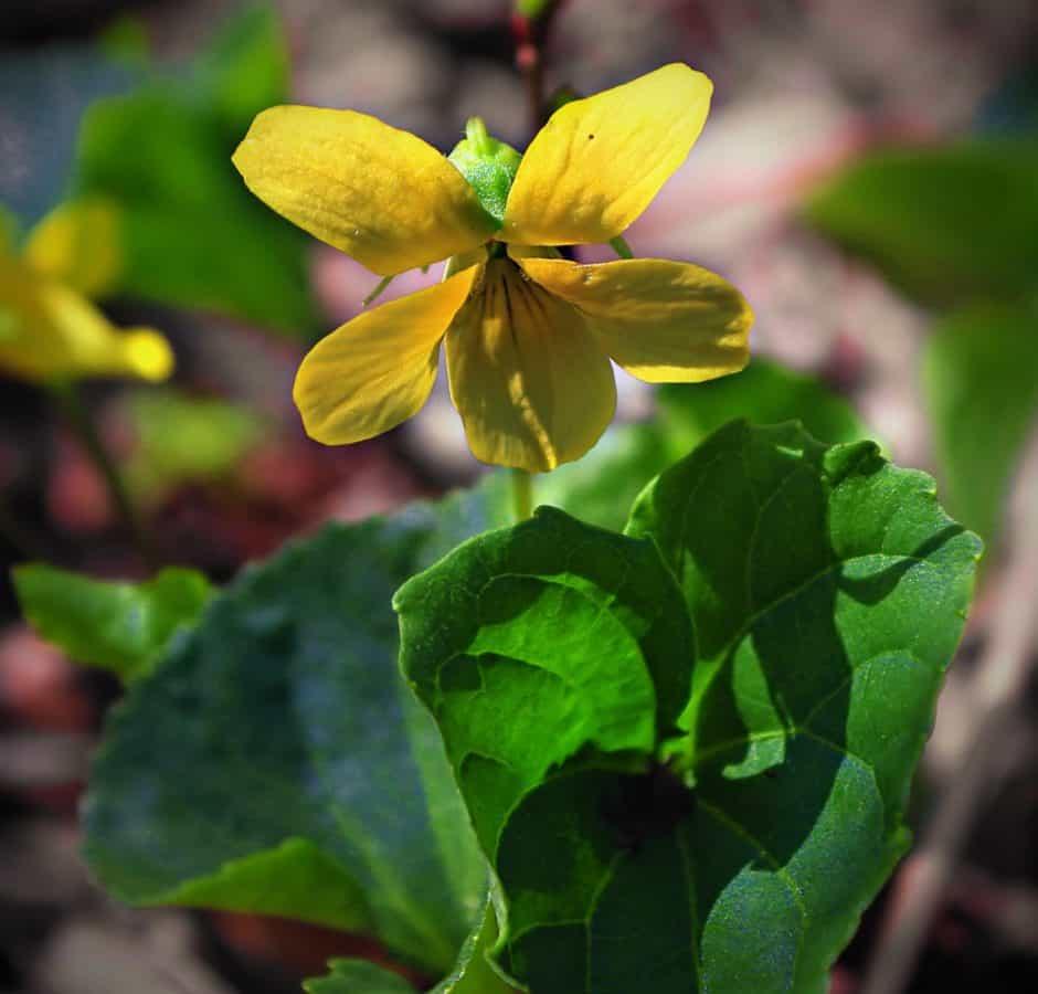 flora, leaf, flower, nature, garden, summer, herb, plant