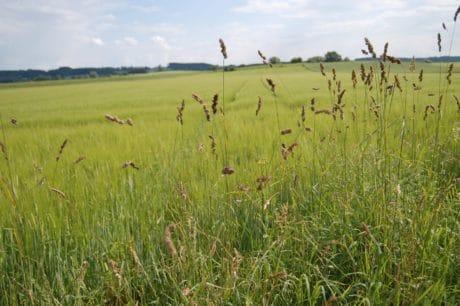 natureza, paisagem rural, agricultura, campo, grama, verão