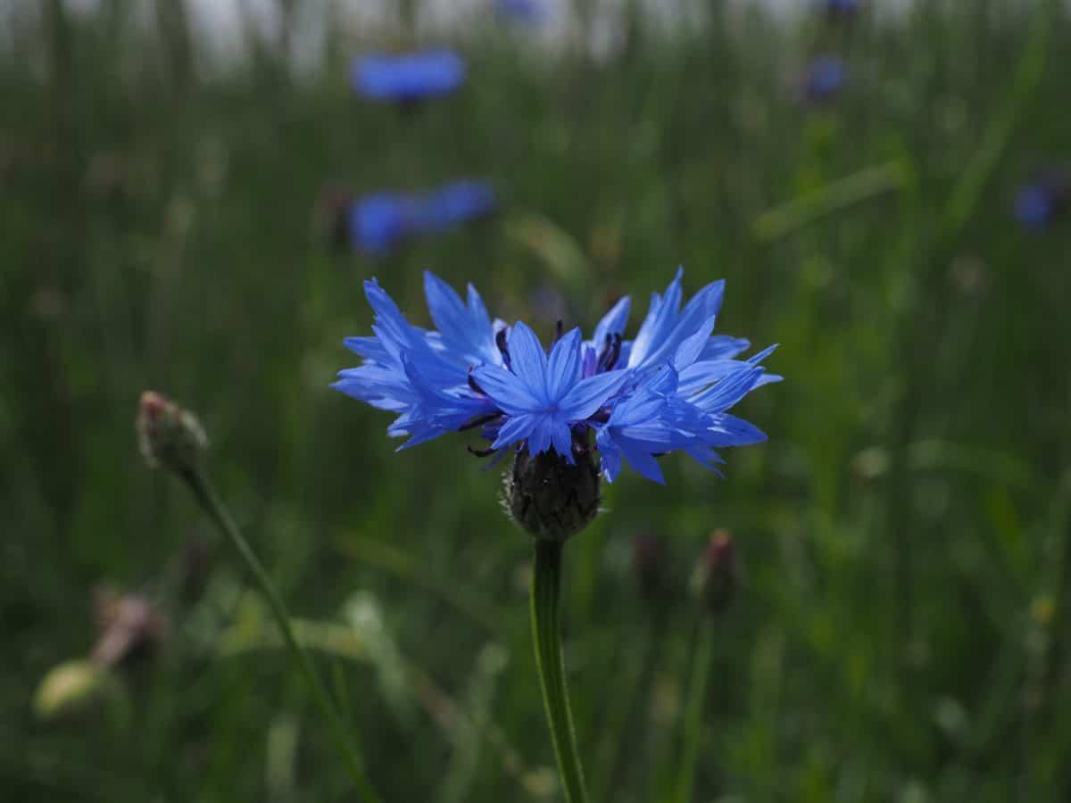 nature, flower, garden, summer, flora, plant, herb