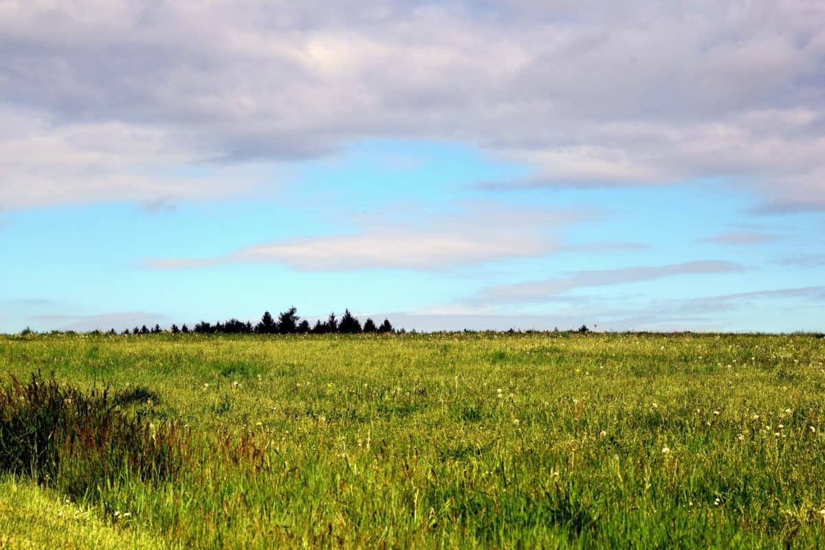 landscape, nature, grass, field, sky, meadow, agriculture