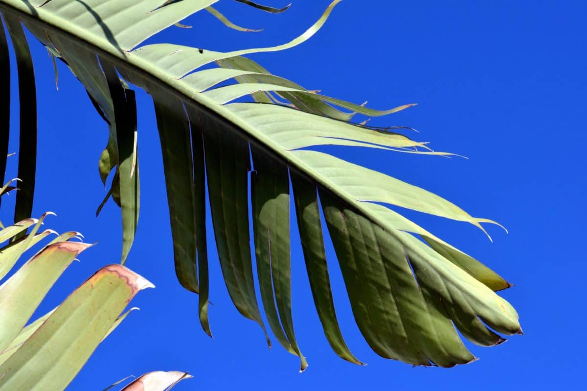 nature, texture, sky, herb, palm tree, green leaves, daylight, outdoor