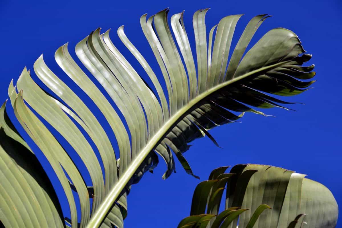 nature, blue sky, green leaf, tree, plant, palm, tree, texture, bark