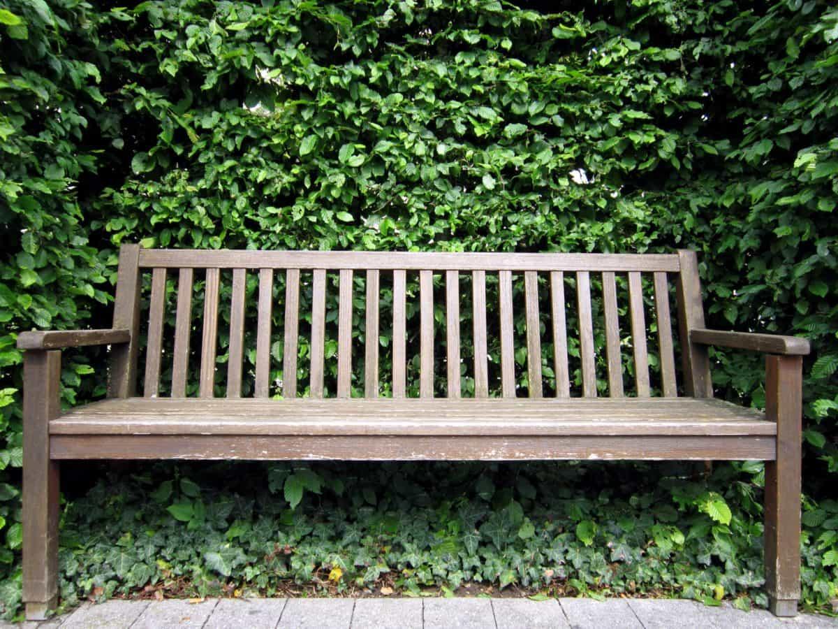 banc, feuille, nature, bois de jardin, l'été,