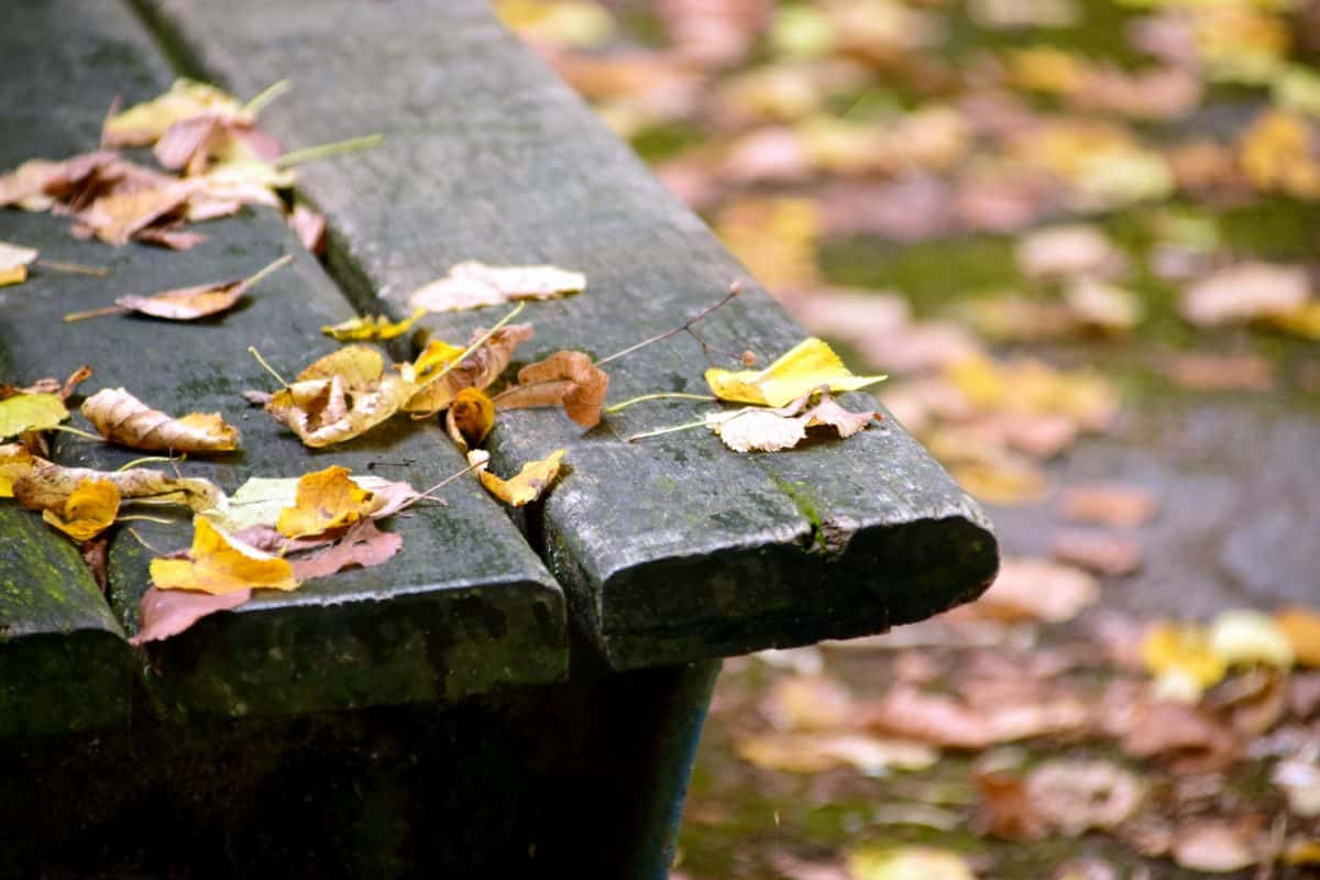 tree, leaf, plank, bench, park, nature, outdoor, autumn