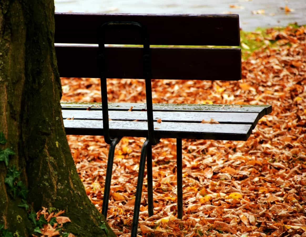 wood, leaf, nature, autumn, tree, outdoor, bench, park