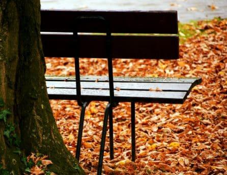 bois, nature, feuilles, automne, arbre, extérieur, banc, parc
