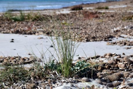 seashore, water, beach, nature, landscape, grass, plant