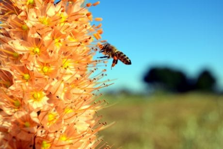 flora, flower, nature, herb, plant, bee, outdoor, blue sky