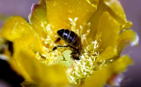 insect, bee, pollen, flower, nature, arthropod, plant