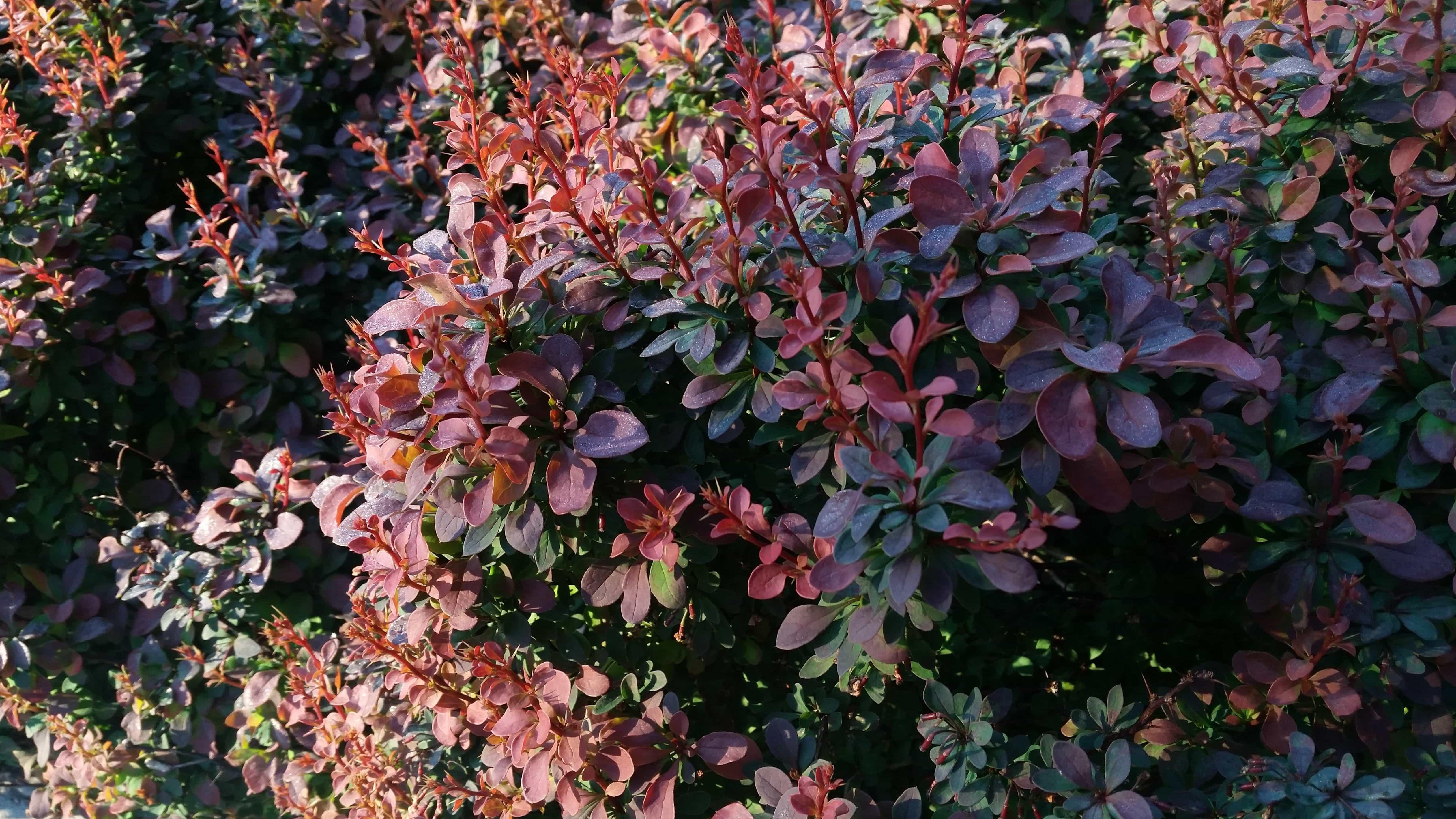 Kostenlose Bild Natur Blumen Blatt Flora Garten Baum