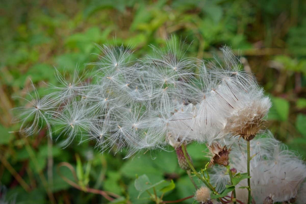 blad, trädgård, sommar, flora, natur, gräs, wildflower