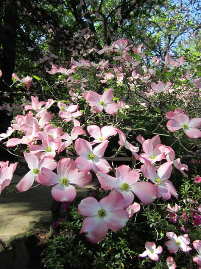 flora, nature, garden, leaf, flower, daylight, sunshine, plant, tree