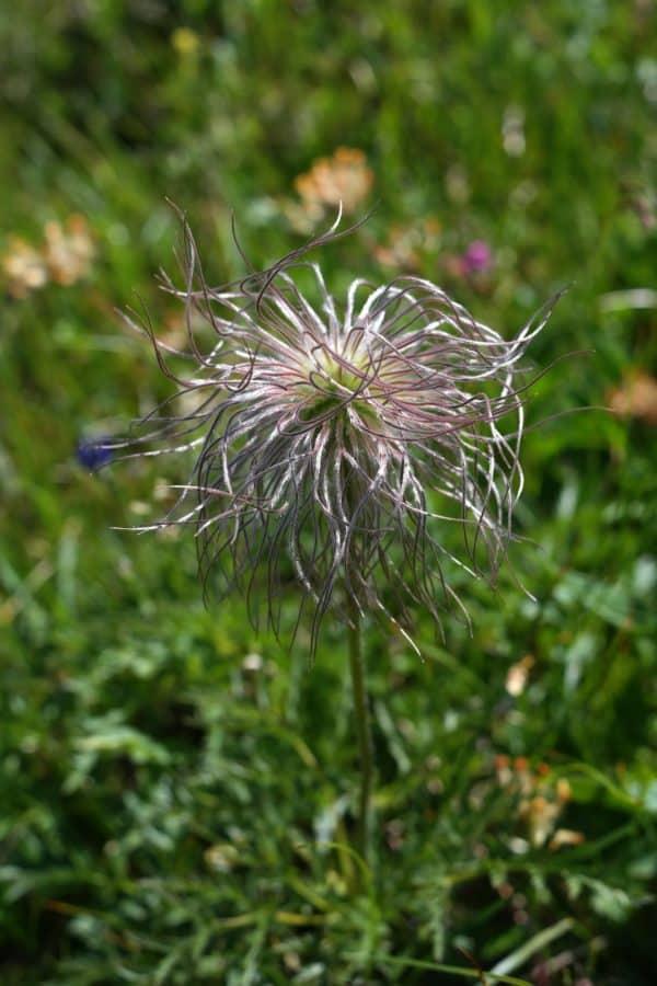 grass, flower, garden, nature, summer, flora, plant