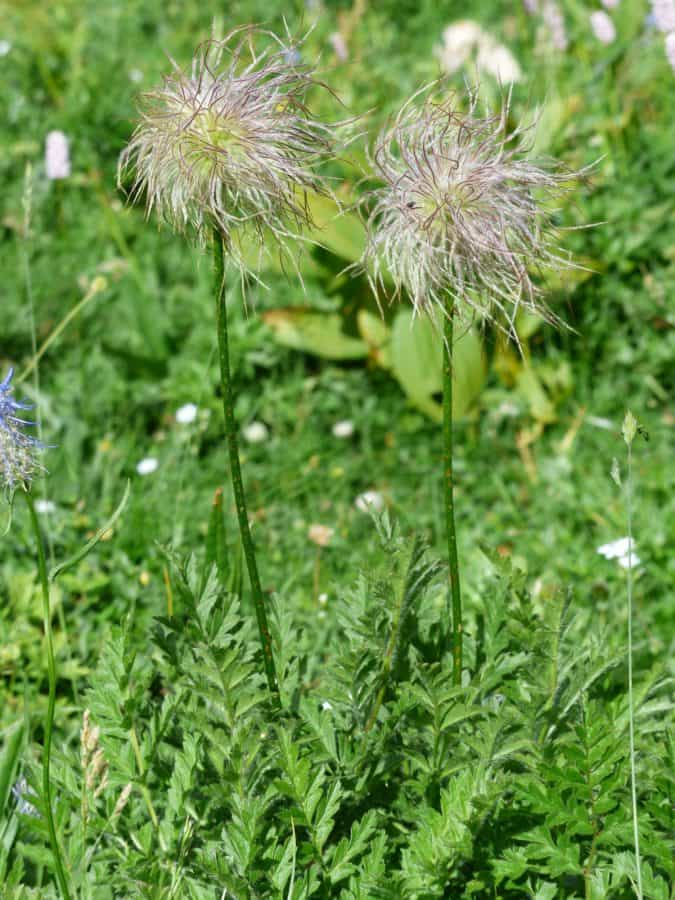 flower, grass, summer, nature, leaf, flora, field, herb, plant