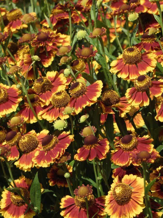 nature, garden, summer, flower, leaf, outdoor, colorful, petal, flora, plant