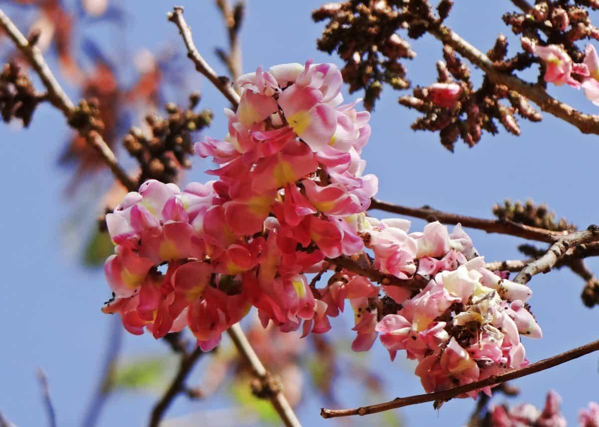 nature, branch, tree, garden, flower, flora, plant, blossom