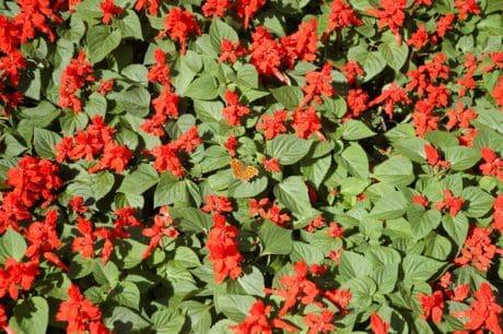 цветя, флора, венчелистче, Градина, лятна, билки, растение, Открит
