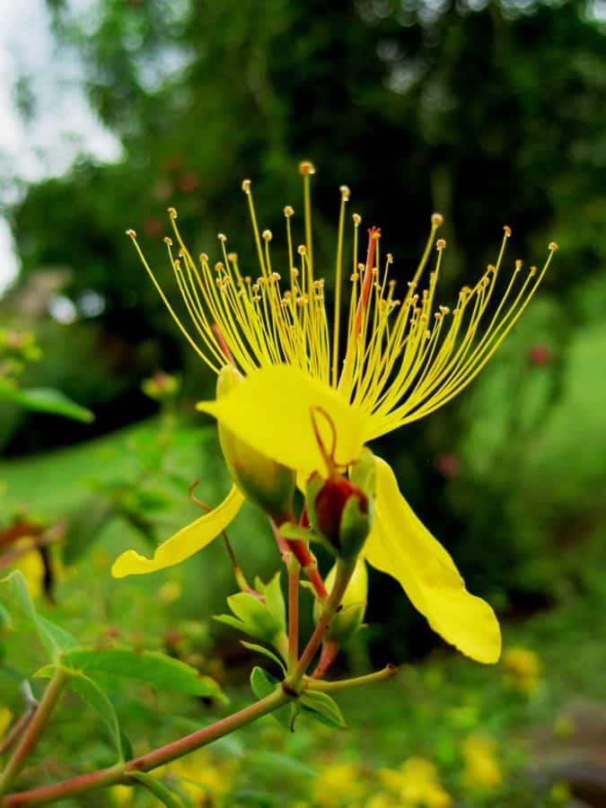 Image libre nature fleur exotique jardin flore for Plante exotique jardin