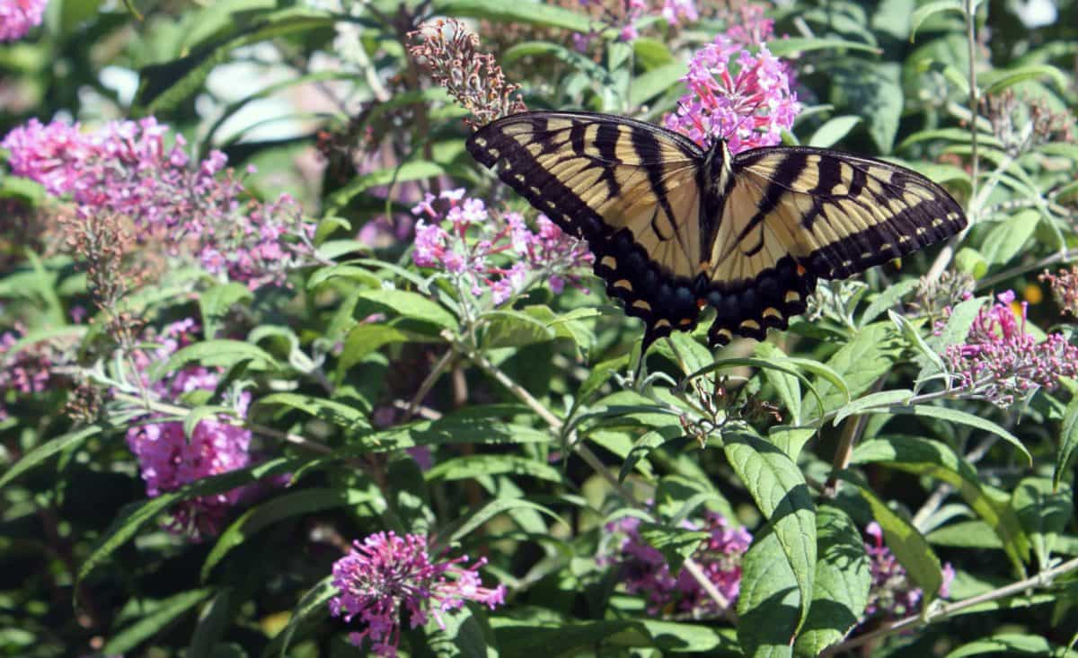 insect, flora, garden, summer, nature, flower, butterfly, leaf