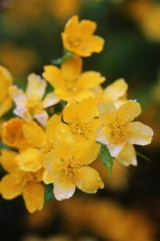 花, 叶子, 夏天, 植物, 自然, 庭院, 植物, 草本