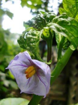 χλωρίδα, κήπο, λουλούδι, φύση, φύλλο, φυτό, βότανο, φως της ημέρας, μακροεντολή