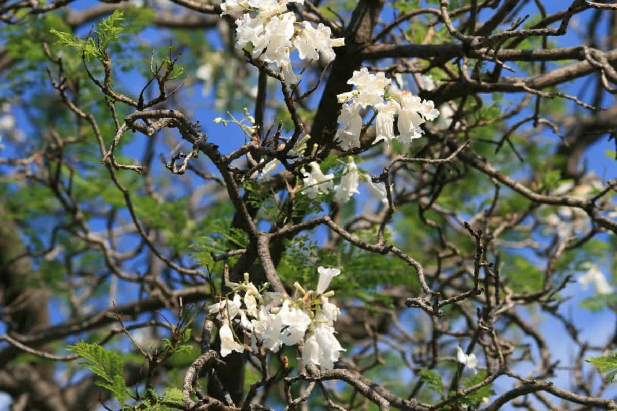 nature, branche, fleur, flore, feuille, environnement, arbuste, plein air