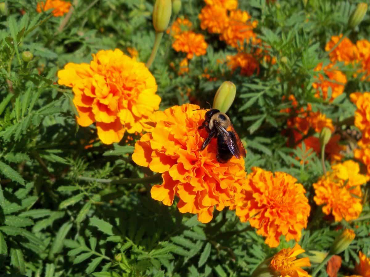 blomst, flora, sommer, fargerike, utendørs, insekt, makro, blad, natur, hage, herb