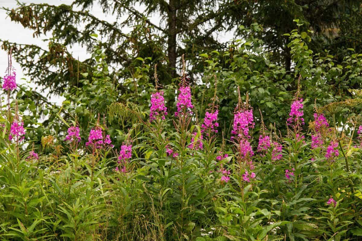 Flora, folha, natureza, jardim, Prado, flores silvestres, verão, erva, planta