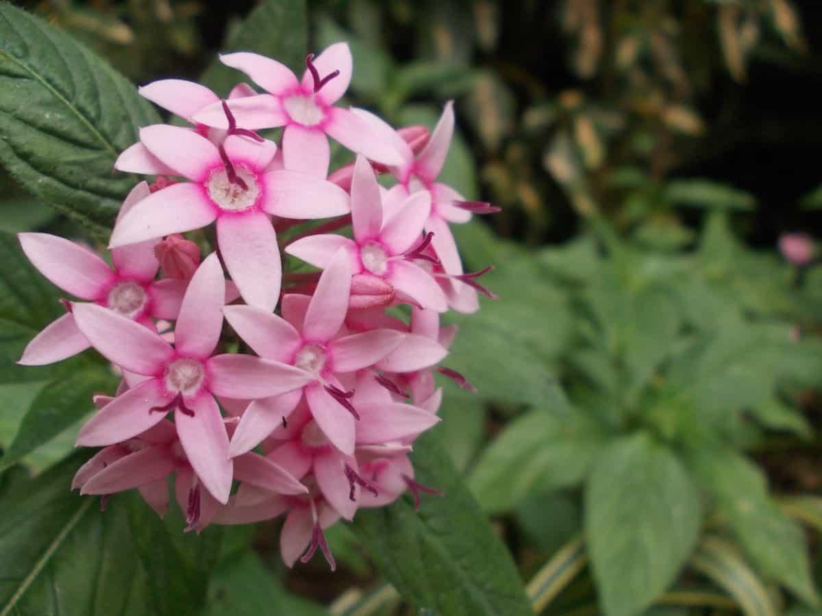 petal, leaf, garden, flora, pink, wildflower, nature, summer, plant
