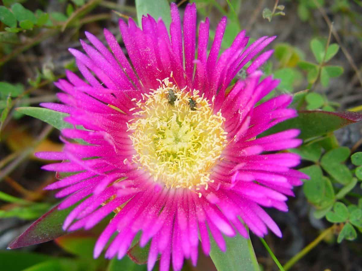 Флора, цветок, Лепесток, лето, лист, Сад, природа, растения
