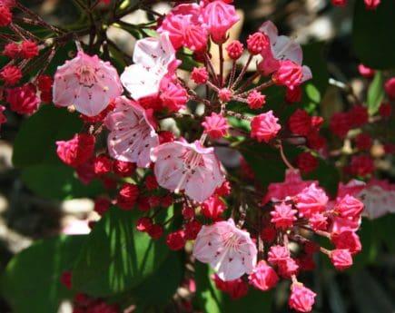 arbre, jardin, feuille, nature, coloré, branche, fleur, pétale, flore