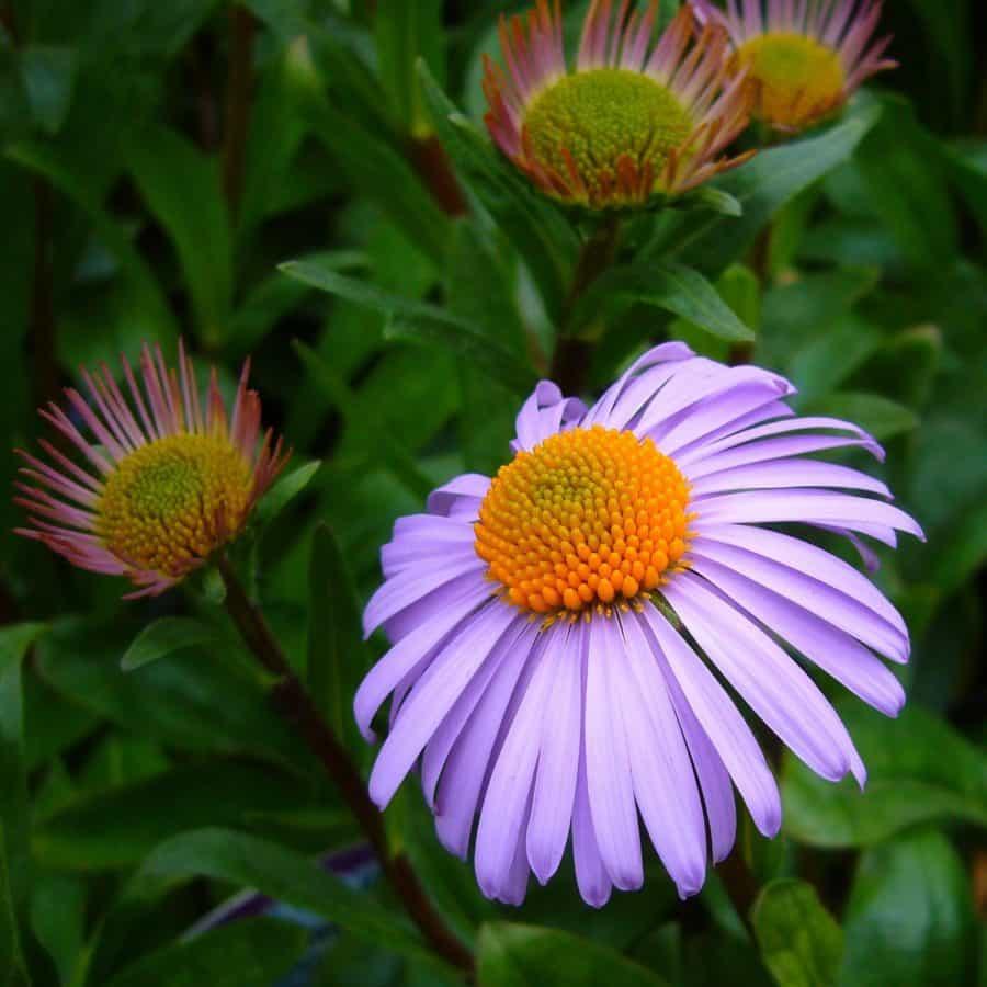 summer, macro, petal, nature, flora, garden, flower, sunflower, plant