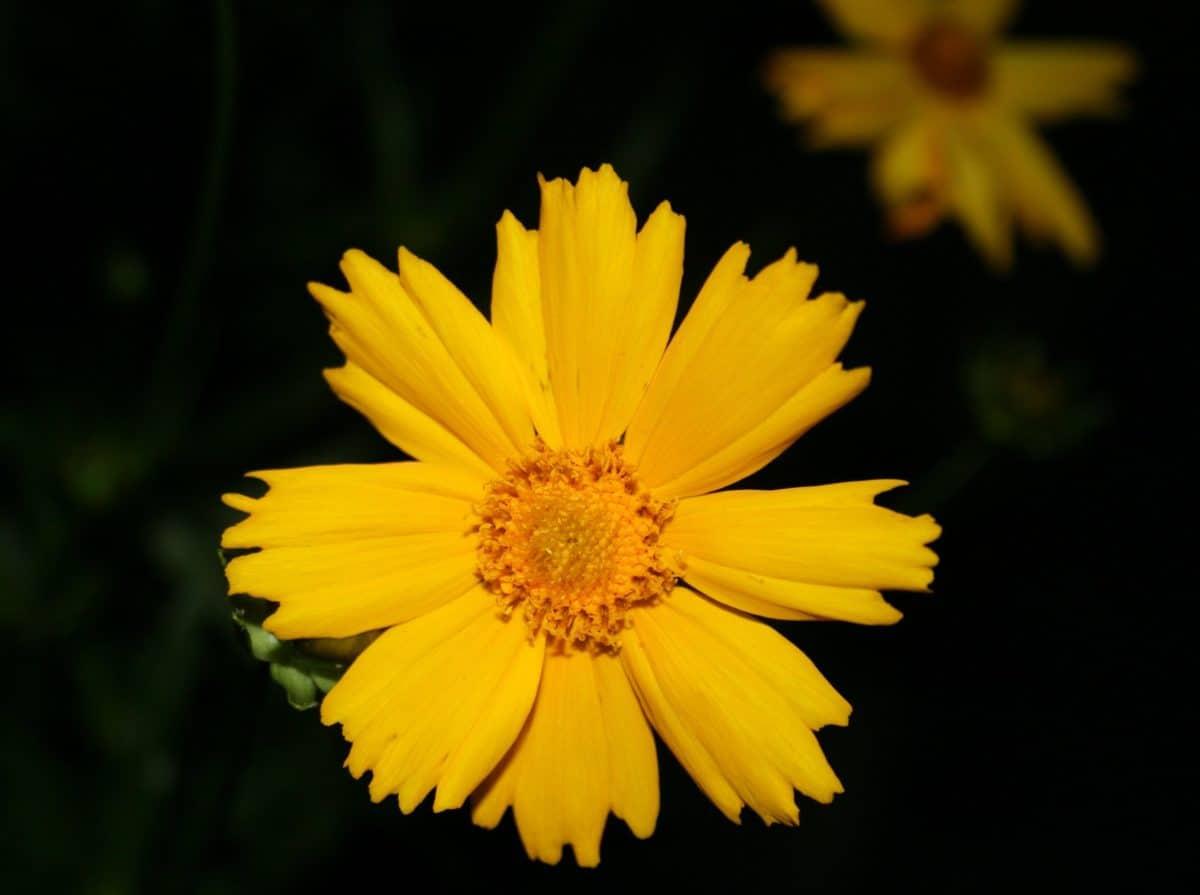 flora, wildflower, leaf, nature, sunflower, outdoor, plant, petal