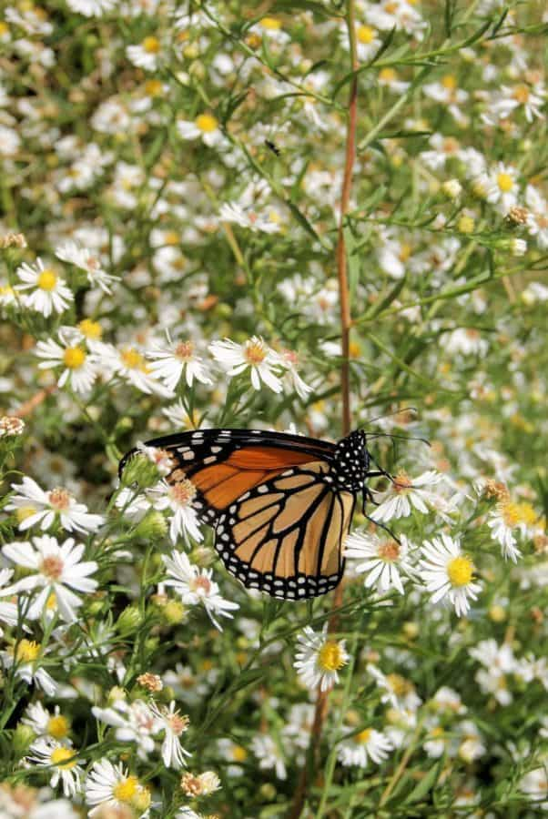 butterfly, nature, summer, flower, insect, plant, garden, colorful, daylight