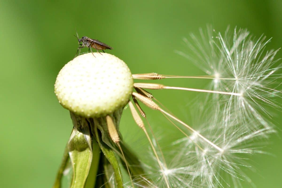 grass, dandelion, nature, herb, daylight, macro, outdoor, seed, plant