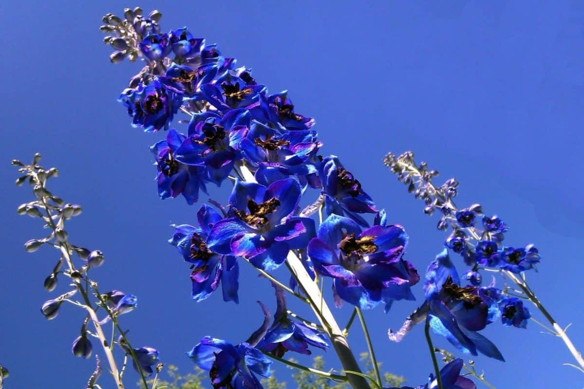 blue sky, flora, nature, summer, leaf, flower, garden, plant