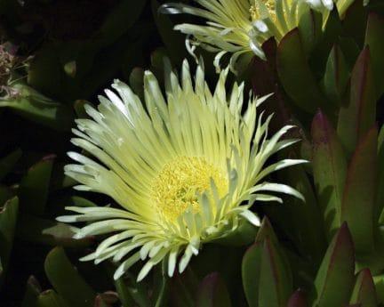 macro, détail, jaune, fleurs, exotique, cactus, flore, nature, feuilles, plante
