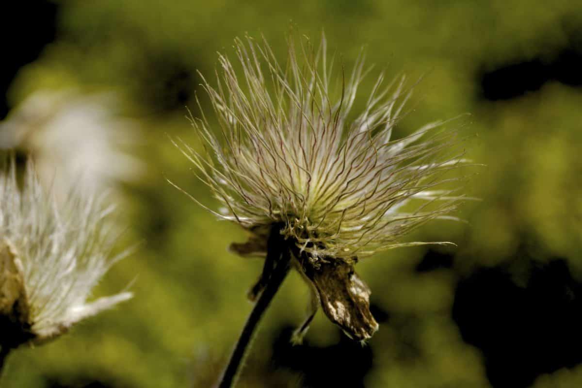 Natur, Flora, Blumen, Pflanzen, im Freien, Makro