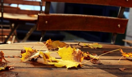 wood, table, autumn, chair, park, outdoor