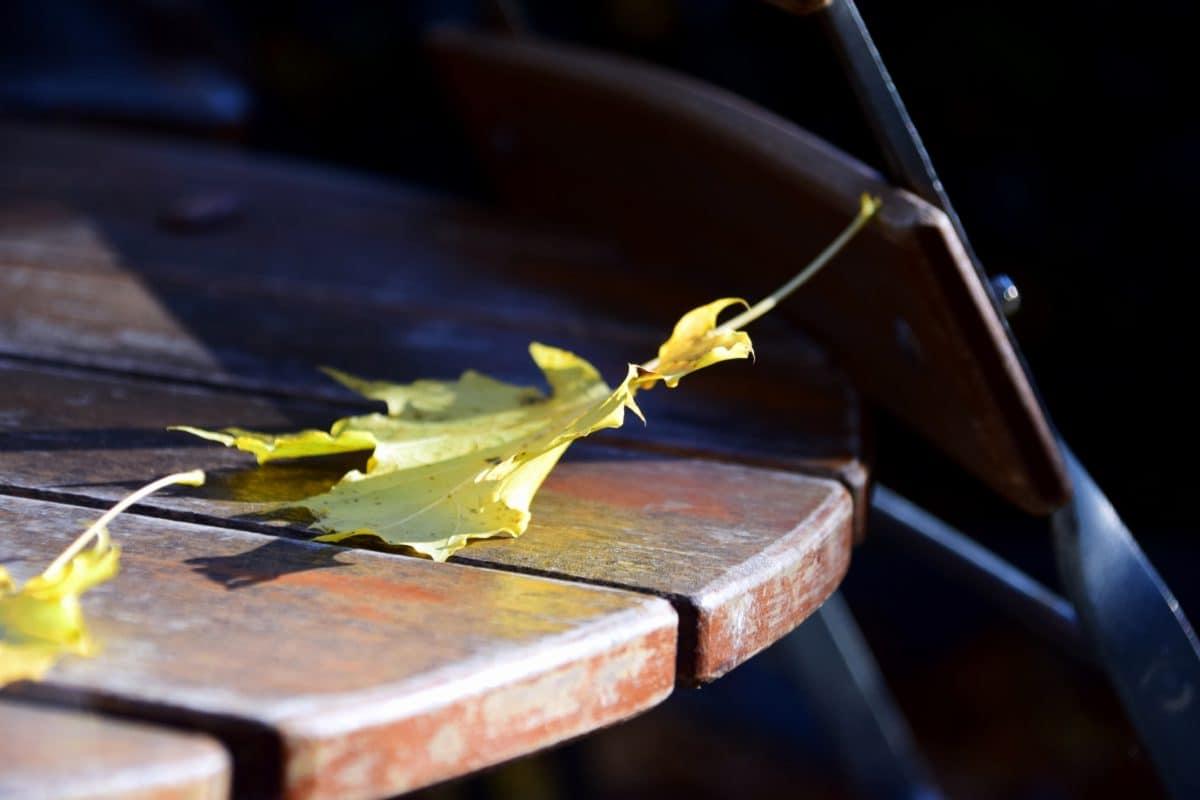 forêt, parc, bois, chaise, table, feuilles, automne, ombre